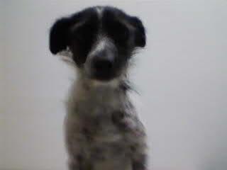 Lilli, la cagnolina ferita da una fucilata vicino ad Urbino