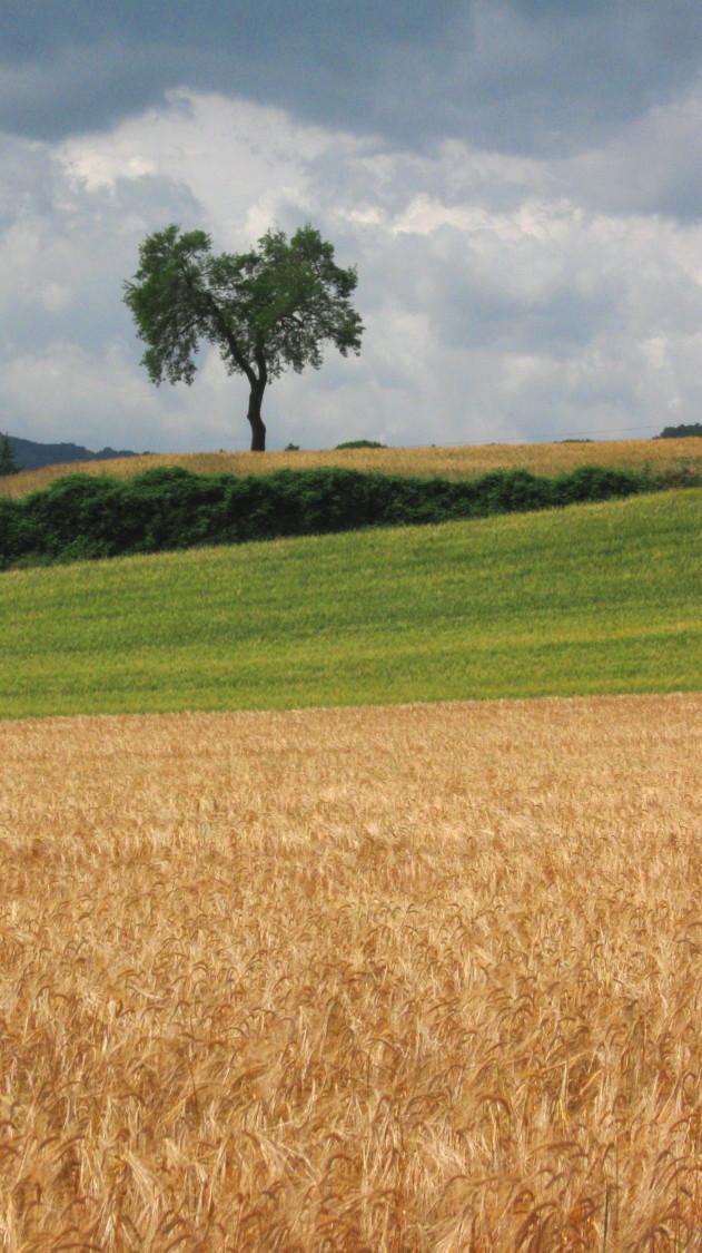 paesaggio_zona_fratterosa.jpg
