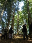 Corso di Scienze Naturali: lezione pratica di ecologia forestale
