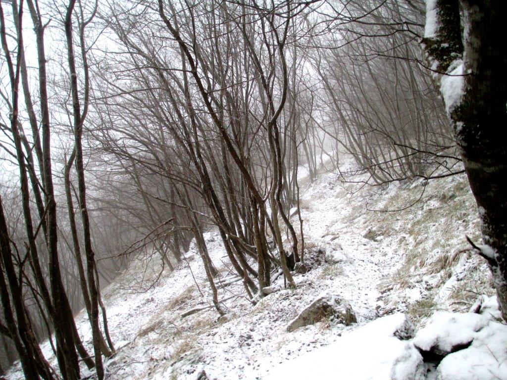 monte catria 054 (2)