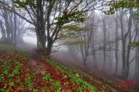 Monte Catria - 26-10-2014