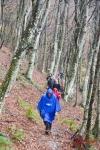 Monte Catria faggeta della Muccicosa 20 novembre 2016