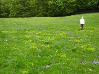 campo-di-viole