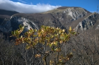 Monte Catria Costa Calecchie